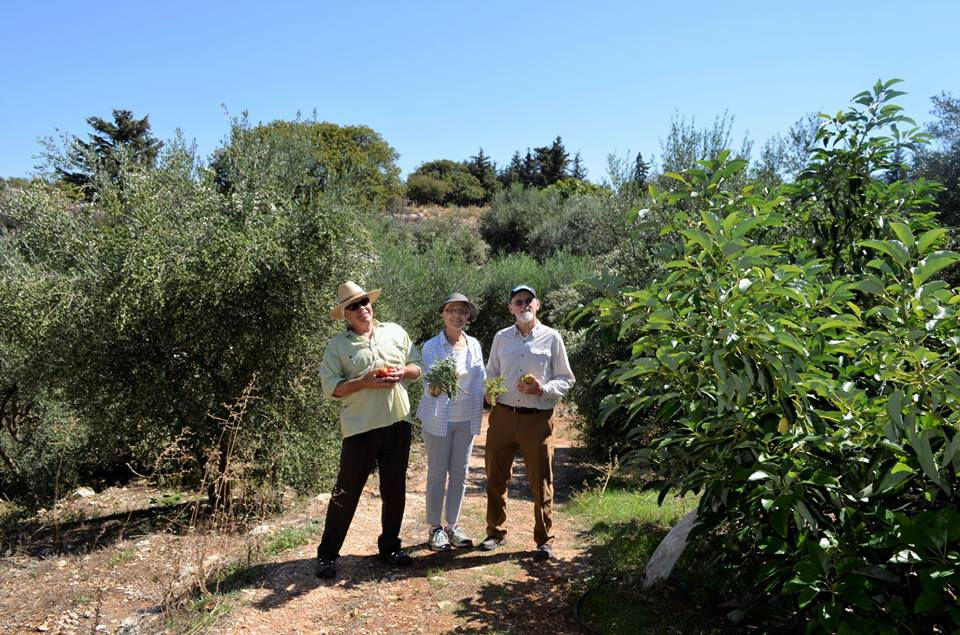 cretan botanical walk