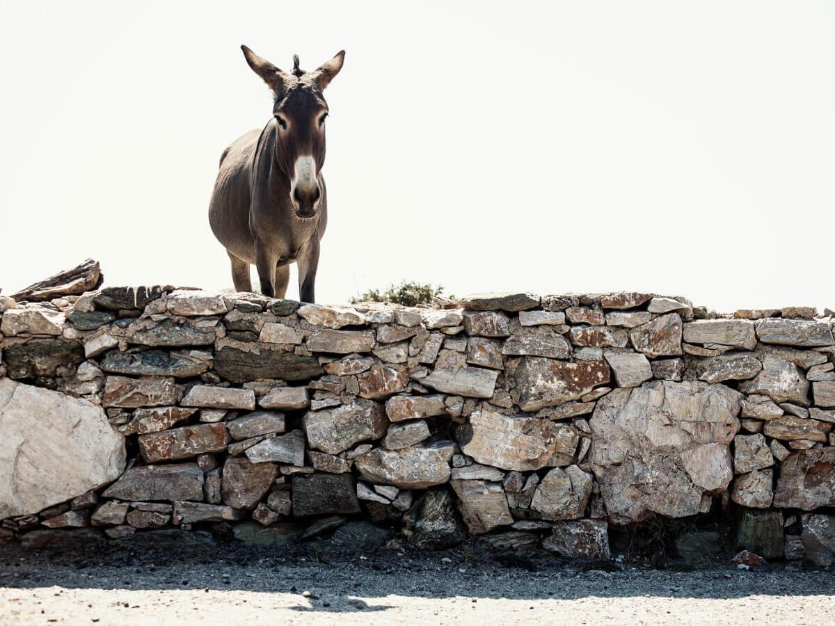 donkey_hike_folegandros